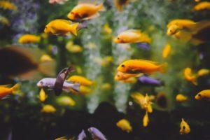 Kauf eines Aquariums für ein Kind oder einen Jugendlichen