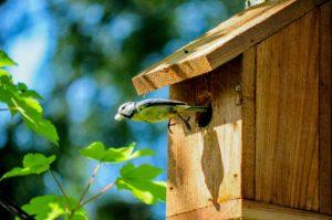 Vögel beobachten dank eines Vogelhauses
